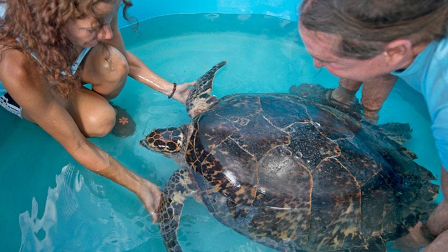 f9e8fe0e-Turtle Transport