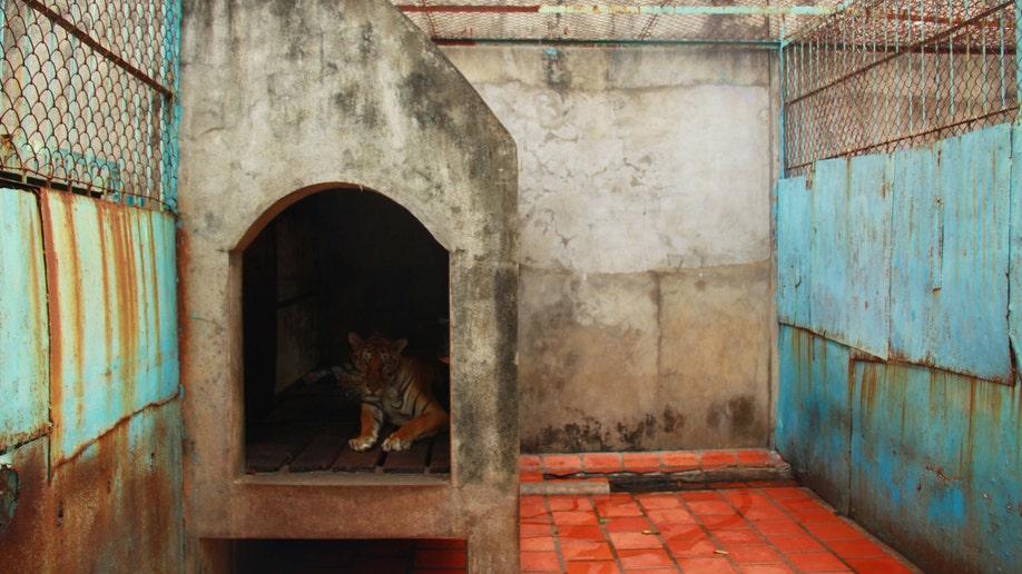 9c914fa4-Vietnam Tiger Farms
