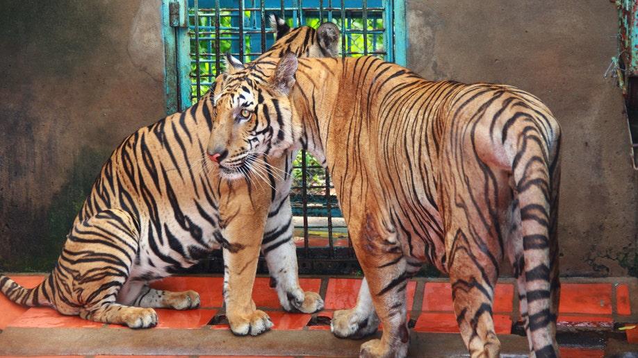 Vietnam Tiger Farms