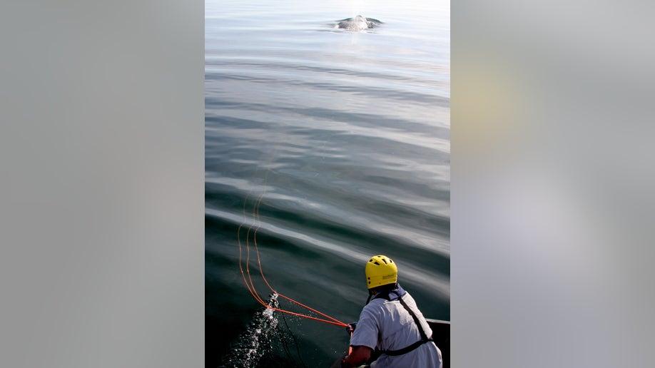 97963a20-Freed Whale Birth