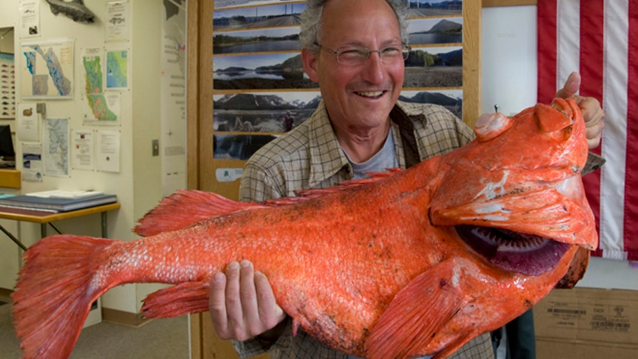 a43d3578-Record Rockfish