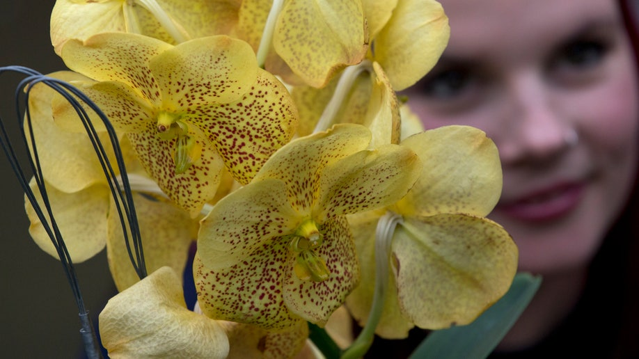 13136f59-Britain Orchids