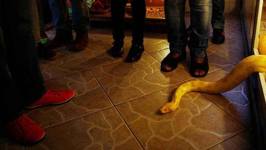 3cbbeafb-South Africa Soweto Snake Show