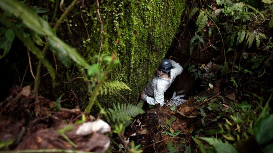 2246b2e8-Puerto Rico Vanishing Frogs