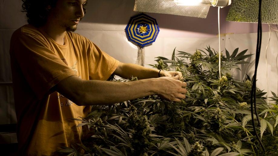 ffa2d9a5-Uruguay Marijuana