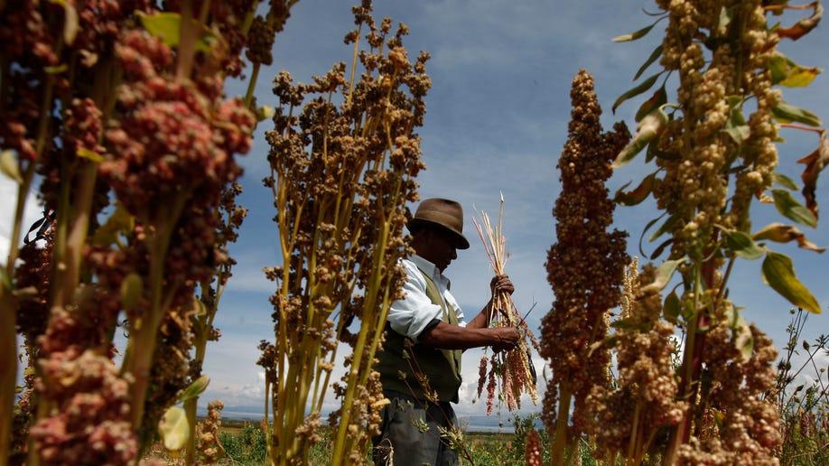 Bolivia Quinoa War