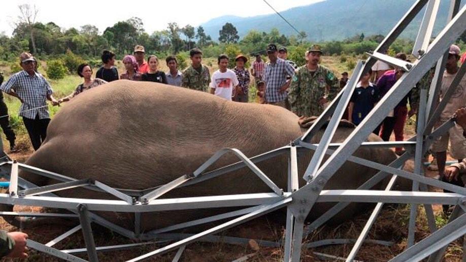 Cambodia Elephant Shocked
