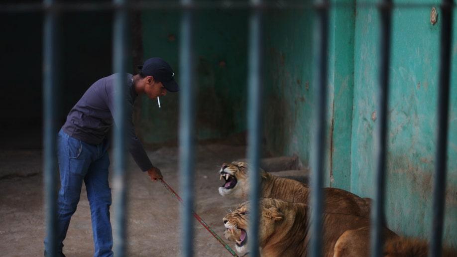 afadde21-Mideast Jordan Animal Abuse