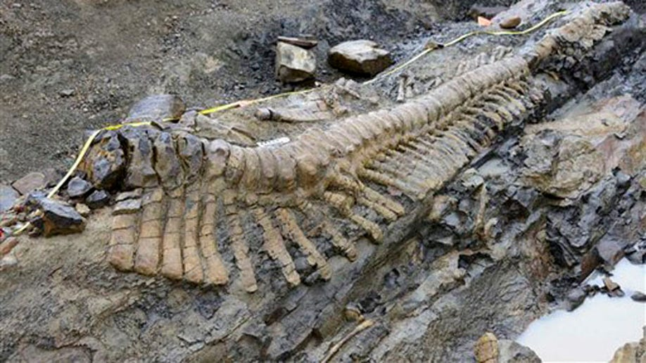 3e1d5d78-CORRECTION Mexico Dinosaur Tail