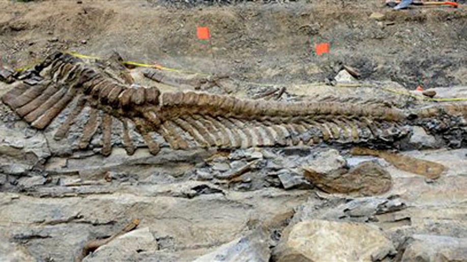 84ee480d-CORRECTION Mexico Dinosaur Tail