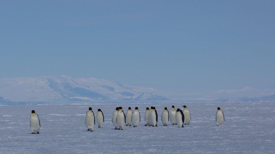 586fedcb-Antarctica Ice Cores
