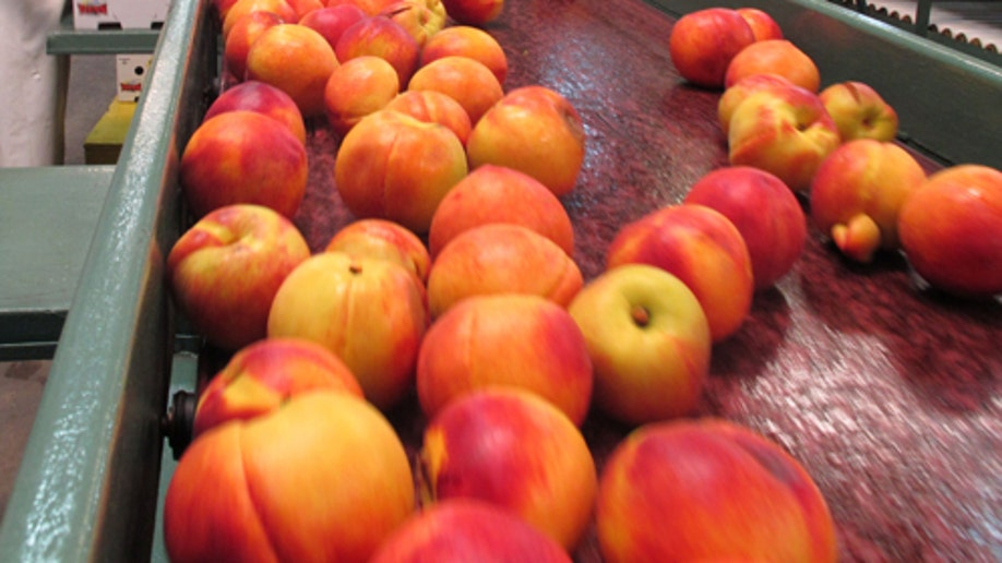 Food And Farm-Peaches To Mexico