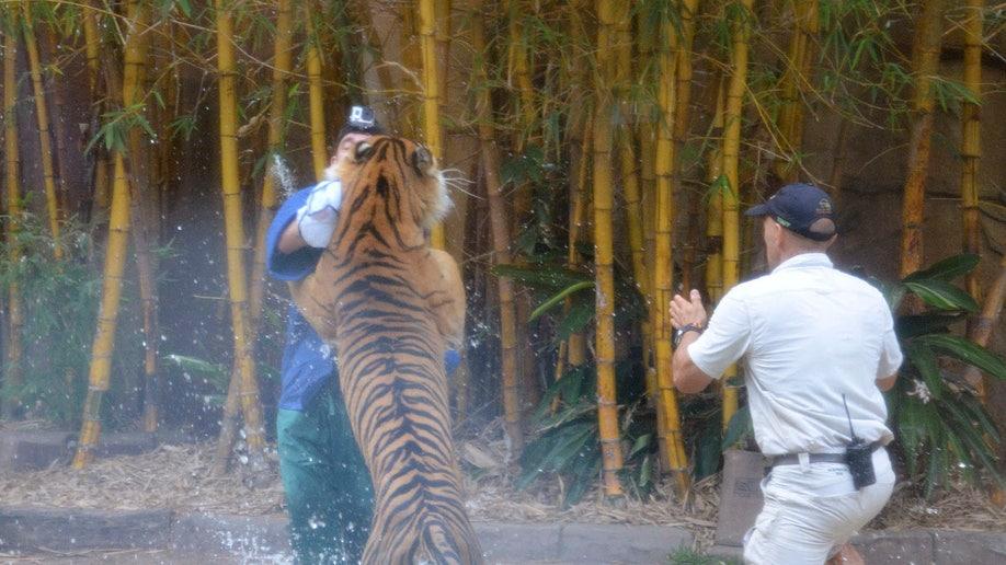 6ca15f55-Australia Tiger