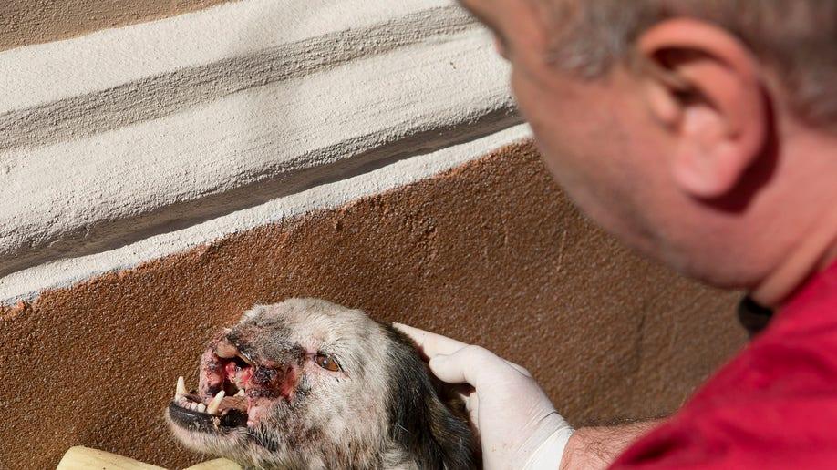 a7aa2b6f-Romania Animal Cruelty