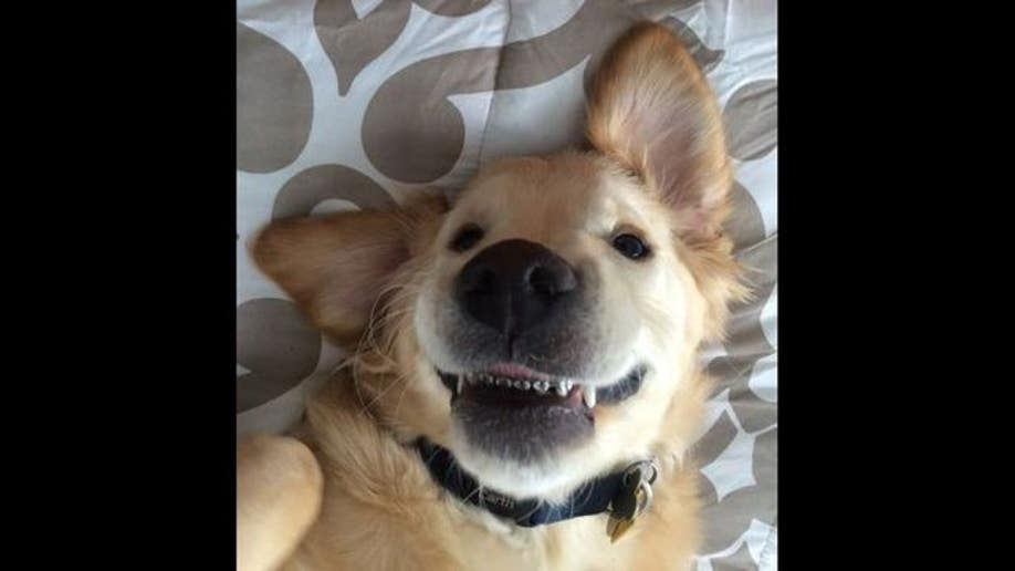 bec4eb45-golden with braces 1