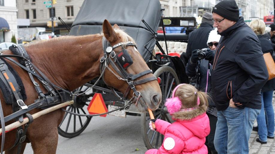 9b5c39ca-Horse Carriage Politics