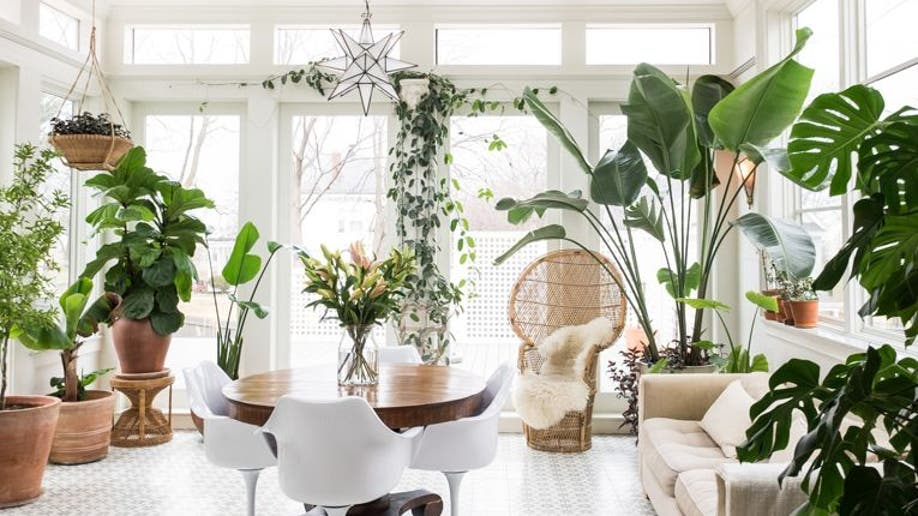 Houzz_Houseplants1