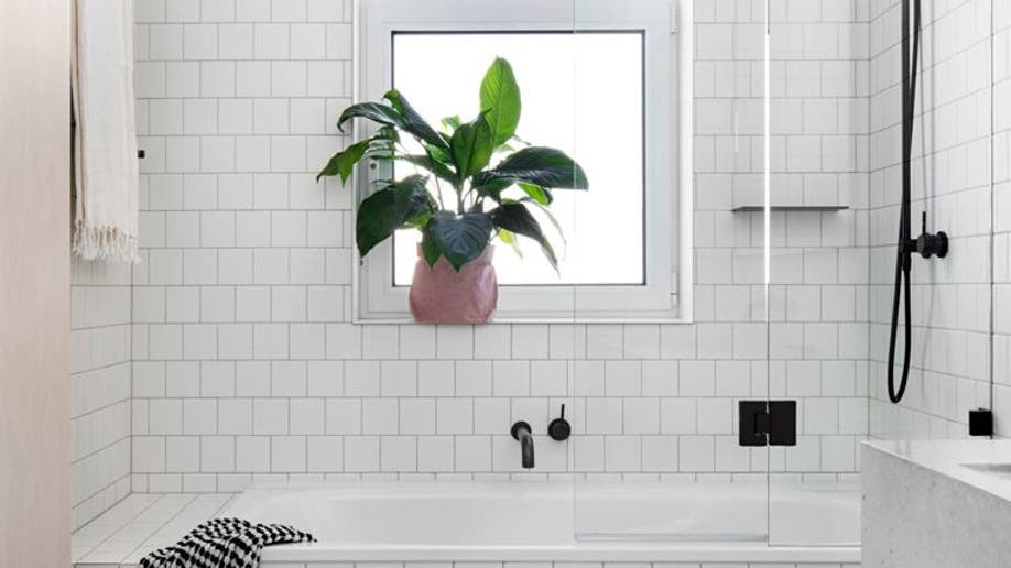 d7155111-Houzz_Houseplants2