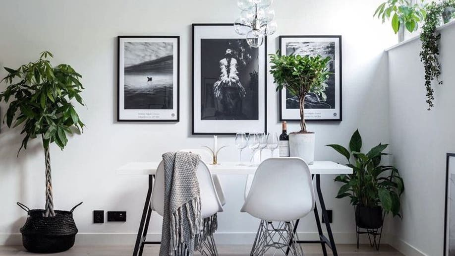 Houzz_Houseplants3