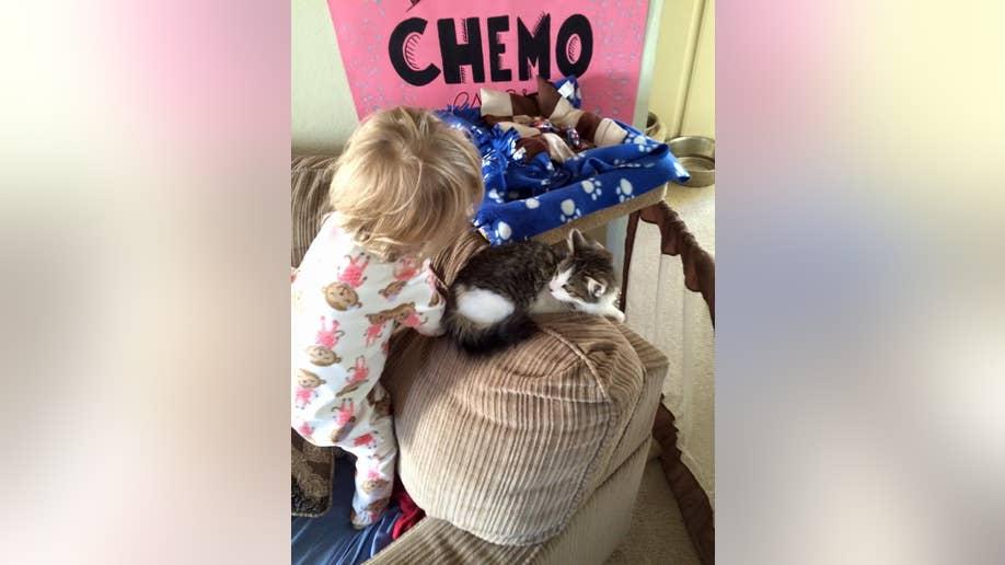 kitten adoption 2