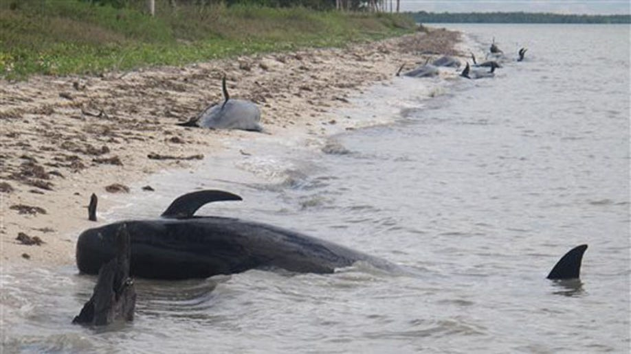 33b06c31-Beached Whales