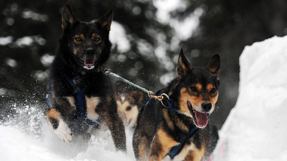 Iditarod, 'The Last Great Race'