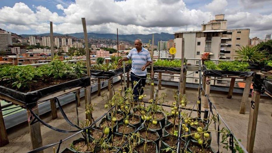 Venezuelans turn to urban gardens amid growing food shortages