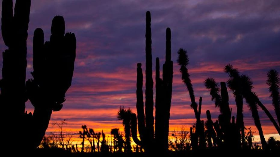 Baja peninsula offers an unspoiled landscape, and flora Dr. Seuss might have created