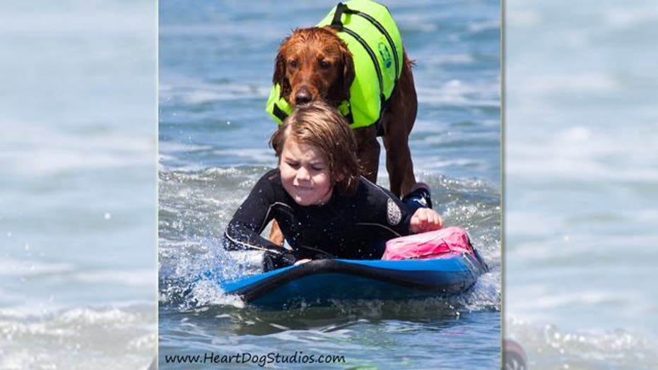 Ricochet the Surfing Therapy Dog