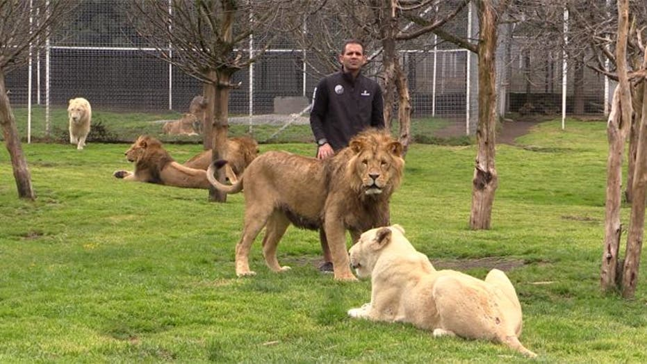 Mexican rescue center for big cats takes cast-offs from cartel honchos