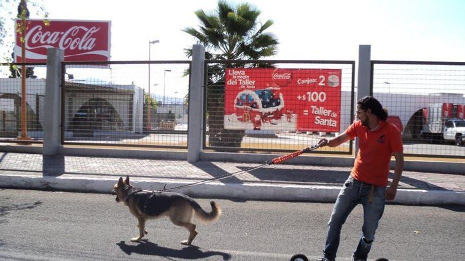 Dog Sled Sport Finds Warm Weather Fans