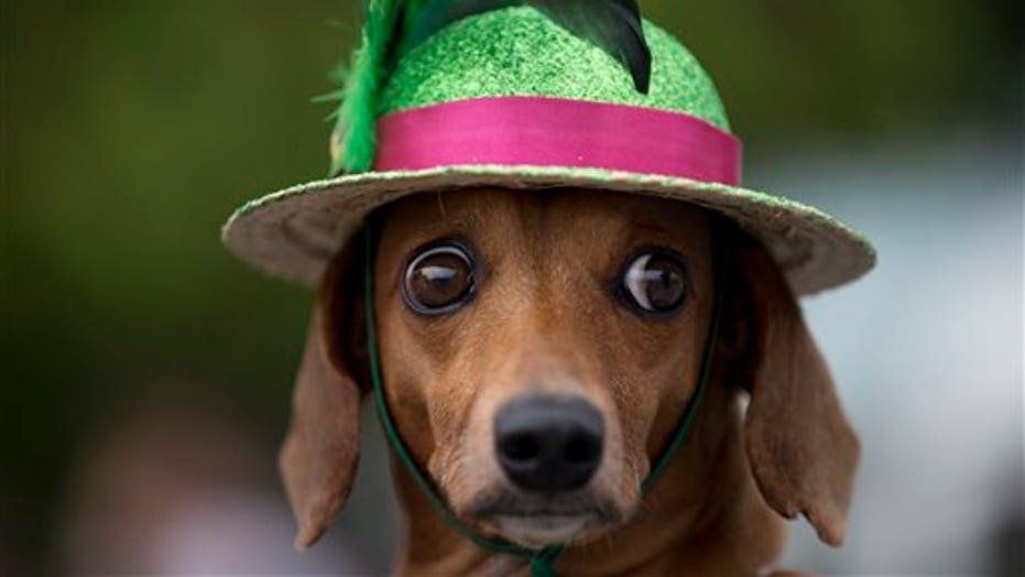 Carnival For Puppies: Rio's Dogs Get A Parade
