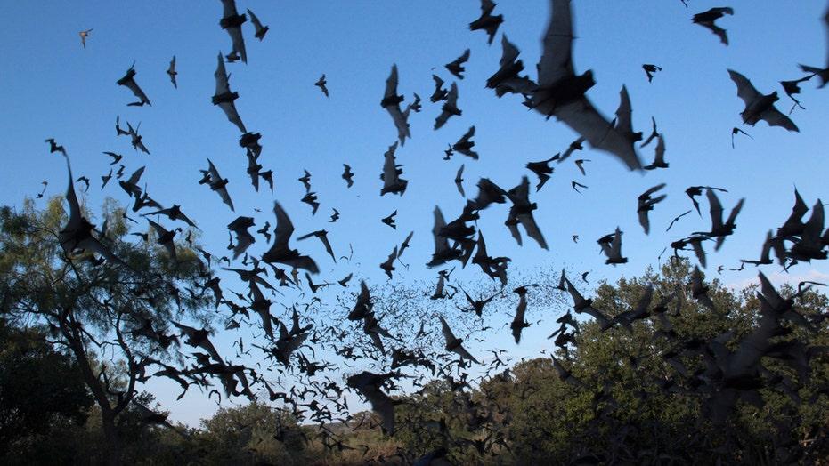 National Weather Service radar picks up huge bat colony in skies over Phoenix