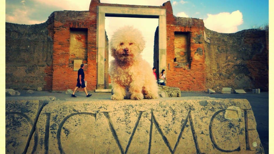 Lucky dog travels the world and poses with style