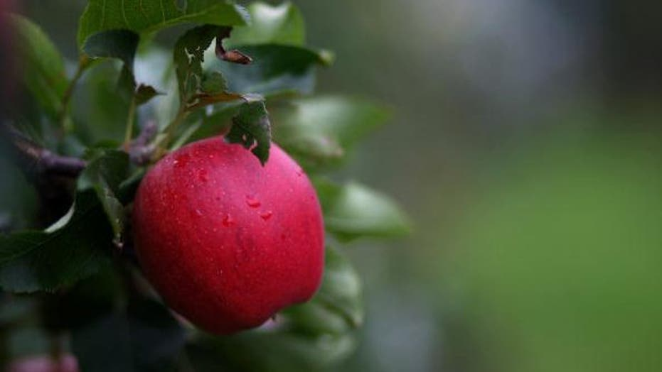 Fall Fruits and Vegetables that Fight Cancer