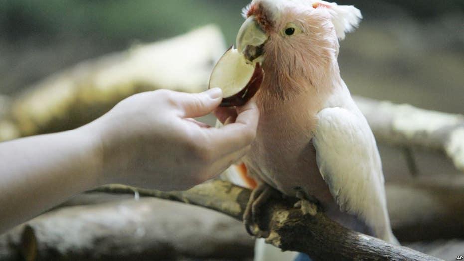 Un uccello esotico è tornato allo zoo della California dopo essere stato rubato