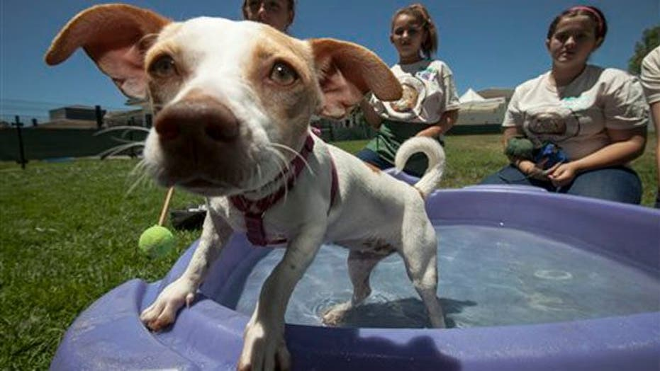 Pets Summer in the Shelters