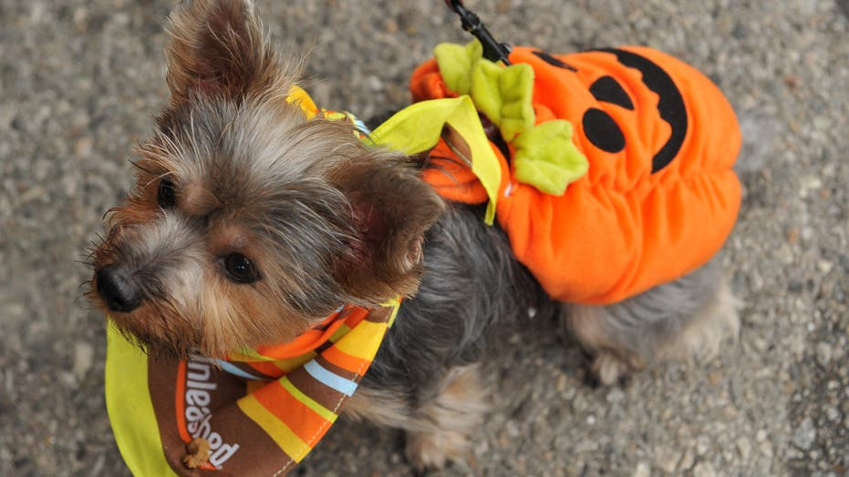 Cute Dogs Dressed Up For Halloween