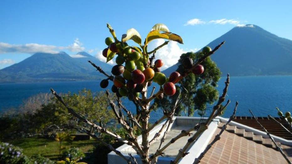 Latin America's Coffee Tourism