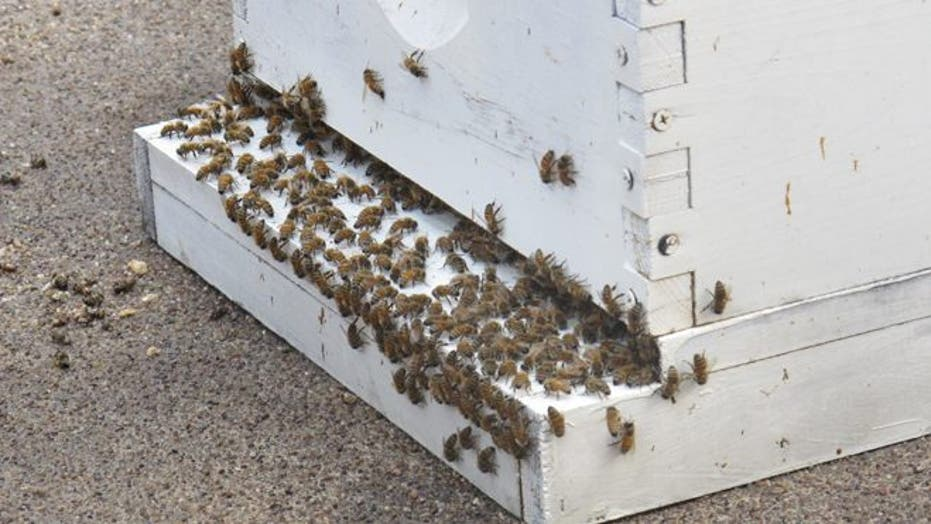 Busy bees at the Barclay