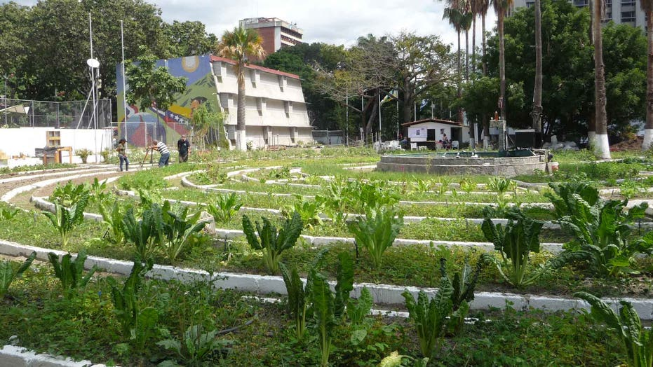 Venezuela´s government launches Ministry of Urban Farming