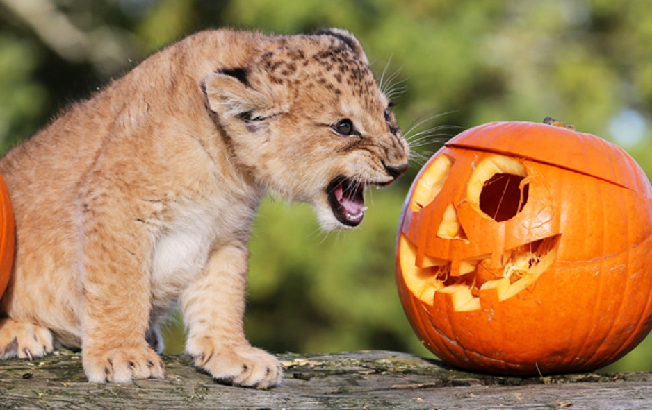 Halloween comes to the zoo