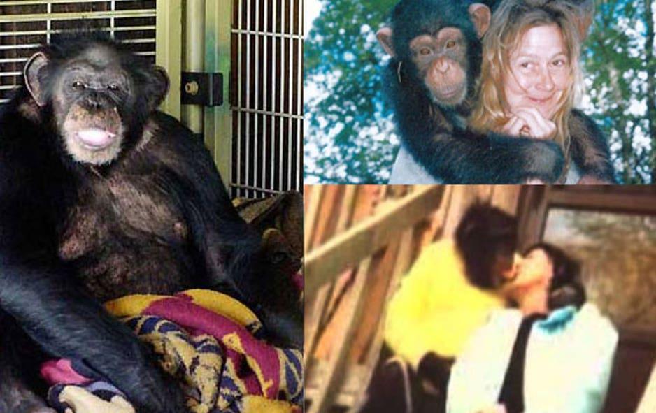 When Animals Attack | Fox News