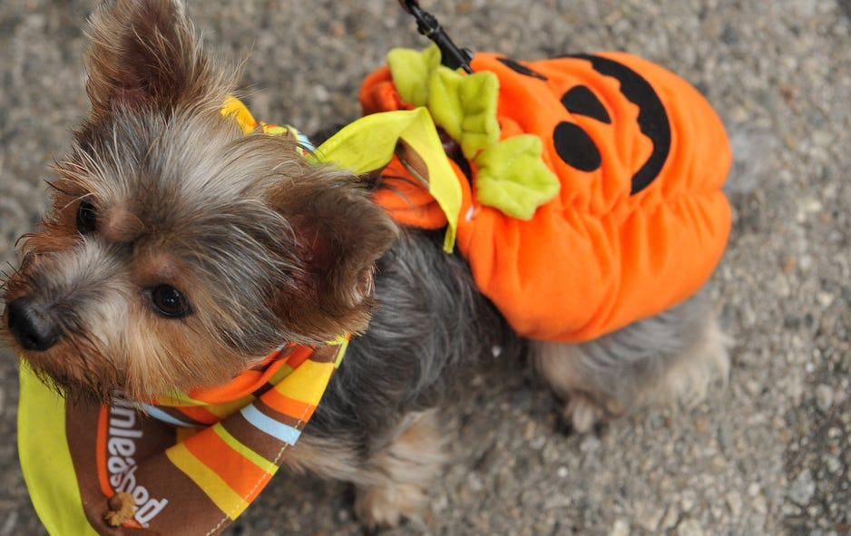 Cute Dogs Dressed Up For Halloween Fox News