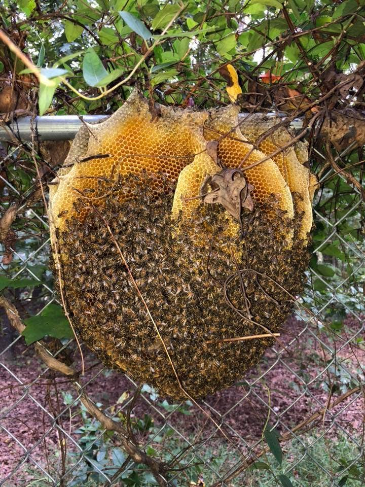 extremely rare open beehive in virginia stuns wildlife expert