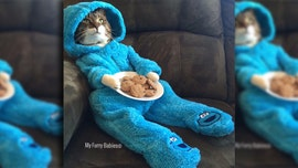 US embassy in Australia apologizes for Cookie Monster cat meeting invite