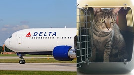 Family claims Delta prioritized cats over allergic passenger: 'That's appalling to me'