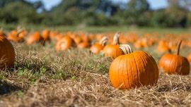Michigan boy, 6, sells pumpkins to raise money for diabetic service dog