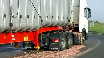 What the cluck? Highway closed after truck spills 40 tons of chicken guts on road