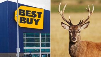 Michigan Best Buy employees say deer walked through front door